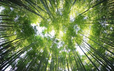Ecobonus 2020, guida agli incentivi per chi esegue lavori di efficientamento energetico